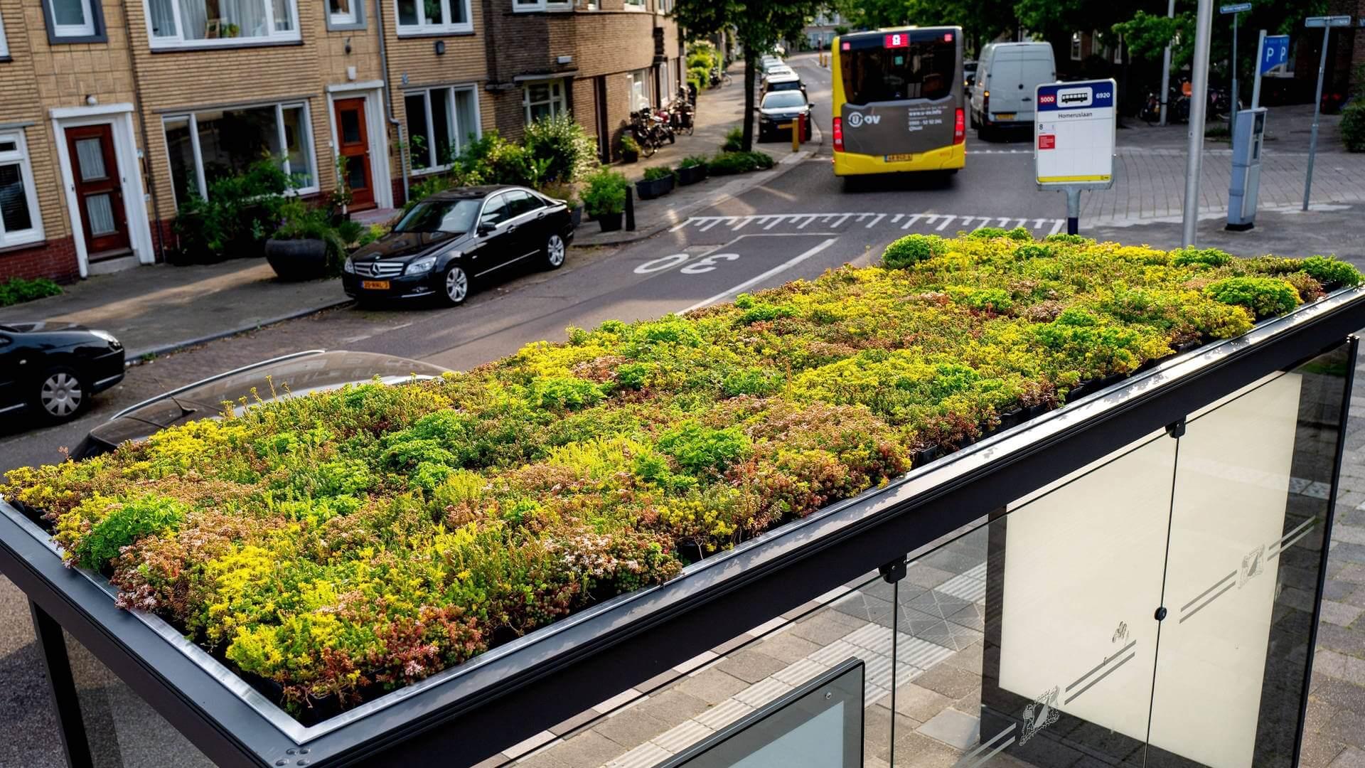Antrag: Grüne Dächer in öffentlichen Bereichen